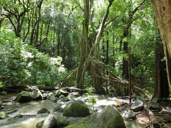 精霊 雨林