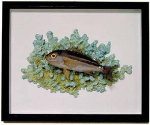 稚魚 イサキ