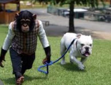 パン くん 処分 チンパンジー 殺