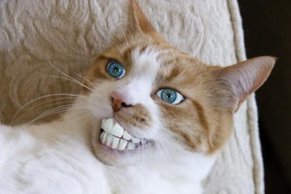 猫【おもしろ】画像集 : asgroupのblog