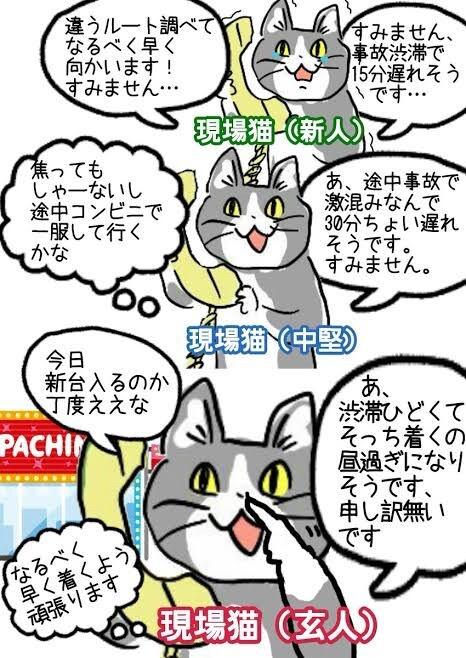 素材 現場 猫