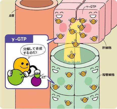 乳酸 脱水 素 酵素 と は