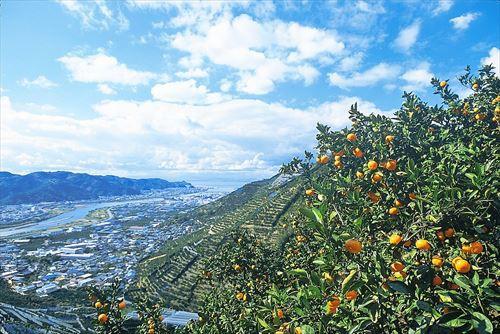 和歌山県とかいう「和歌山」という名が似合い過ぎる地