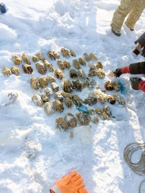 【朗報】ロシアで人の手首がたくさん見つかるwwwww