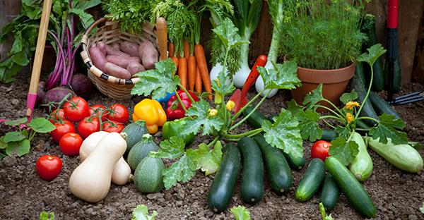 賃貸だけど野菜を育てたい