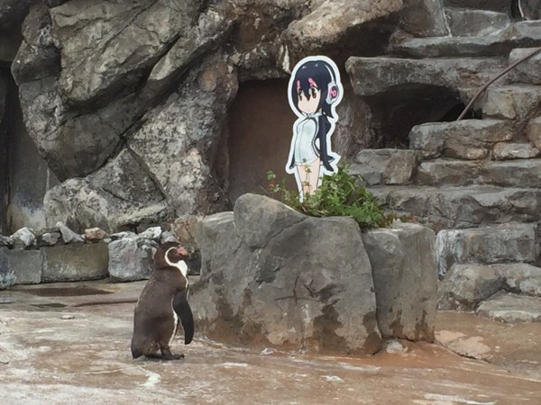【訃報】 フンボルトペンギンのグレープ君、亡くなる