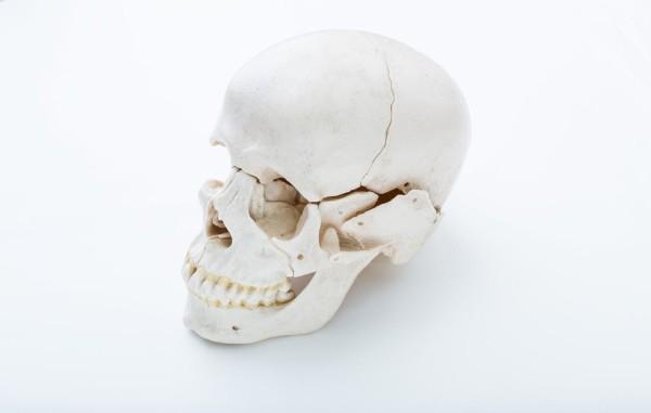鹿児島県立高校、デッサン用の頭蓋骨が本物人骨だったことが判明(2校目)
