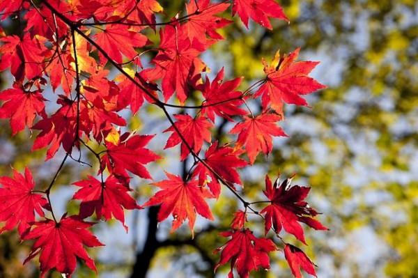 【速報】 日本列島、秋になる