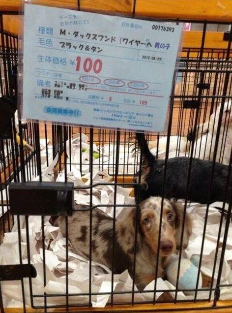 犬 クーアンドリク 保護