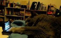 リックロールしてしまった猫 : インパクト野郎