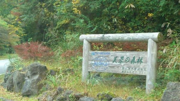 __十里木高原別荘地芙蓉の森林