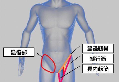 靭帯 鼠径 『スカルパ三角(大腿三角)』とは? 「構成・通るモノ・触診方法」も解説するよ
