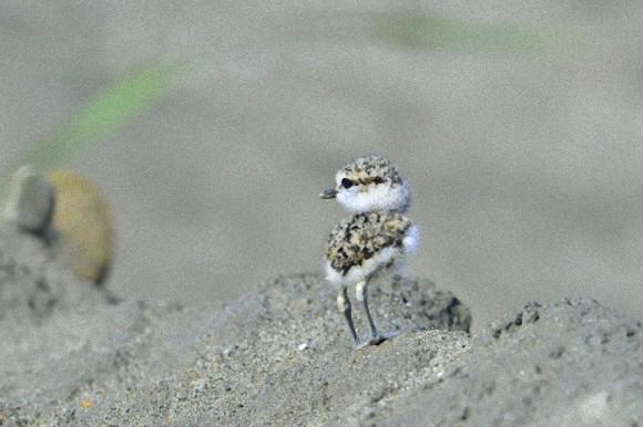 メジロの可愛いさは異常 [無断転載禁止]©2ch.netYouTube動画>4本 ->画像>126枚
