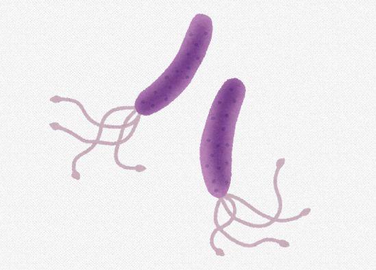 ピロリ菌の除去しないと胃がんになりやすいらしいな 日本人の感染率は2人に1人