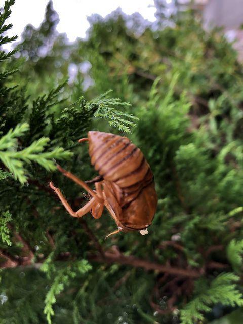 あつ森 七月 虫