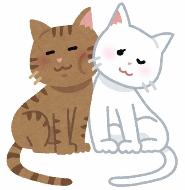 【イラッ】うちに猫の親子が来る。猫好きなので可愛くて微笑ましいが毎日玄関横に●してくのでストレスがたまる
