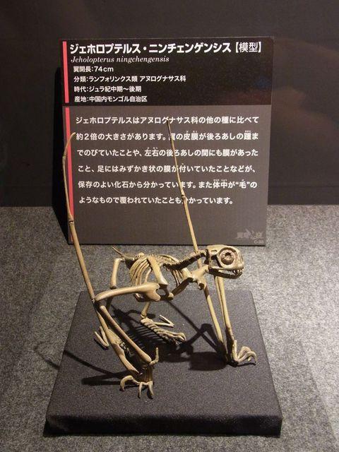 骨格模型LOVE : Knick-knack toys
