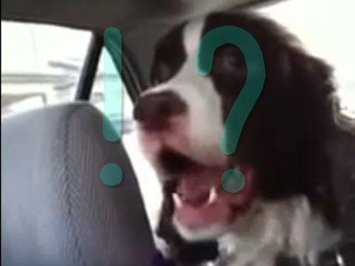 犬 の 鳴き声 動画