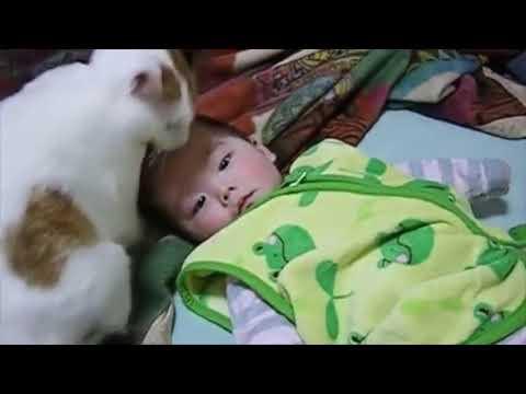 赤ちゃん 好き 動画