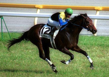 うまなみ 競馬速報 【競馬】藤田伸二に競馬界から圧力か?「藤田には関わるな」