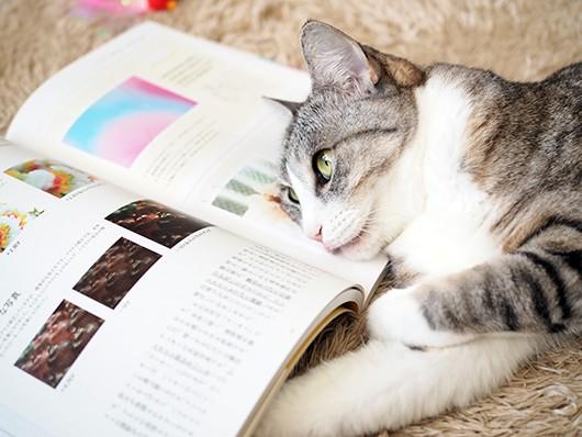 お勉強します!! : ねこ3生活 Powered by ライブドアブログ