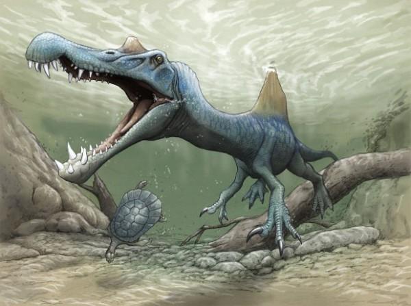 【画像】海岸で岩を蹴ったら大発見!スピノサウルスの化石見つかるwwwwwww