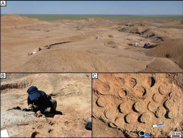 【画像】アジア最大の恐竜の巣!モンゴル・ゴビ砂漠で発見「卵もたくさん」北大などwwwwww