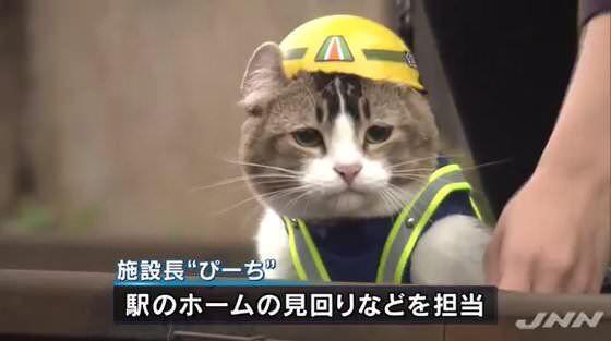 「西武 猫 なぜ」の画像検索結果