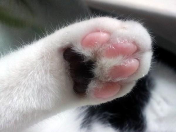 【動画】カンフー映画に影響され過ぎた猫がこちらwwww