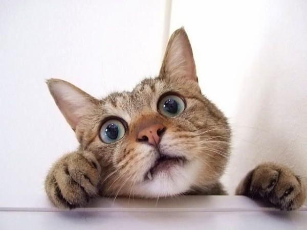 【画像】長年、猫の毛を集め続けるとトンデモナイ大きさになる件wwww