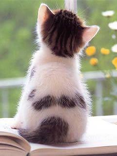 猫 壁紙 可愛い 画像