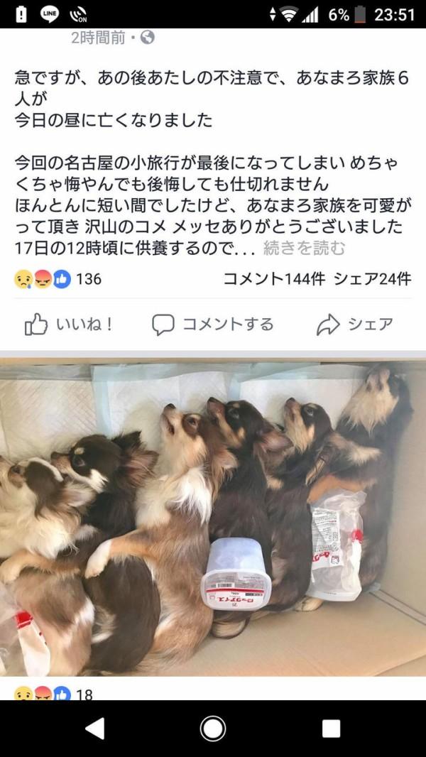 マンさん、飼い犬6頭を蒸し焼きにしてSNSに画像を投稿してイイね稼ぎをする