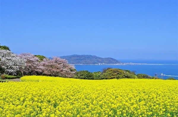 や 菜の花 与謝 蕪村