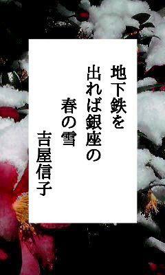 02月12日 今日の俳句 春の雪① : 蝉海(semiumi)の写真俳句blog