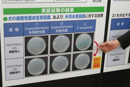 シャープ、プラズマクラスターに新効果 ペットの皮膚病を抑制