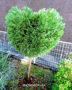 いけない は に 木 庭 て 植え
