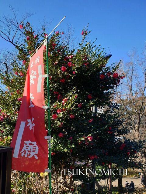 ポスト 365 俳句 俳句ポスト365 兼題「鮫」