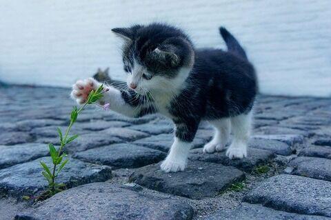 オードリー 若林 猫