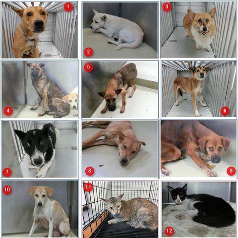 徳島 県 動物 愛護 管理 センター